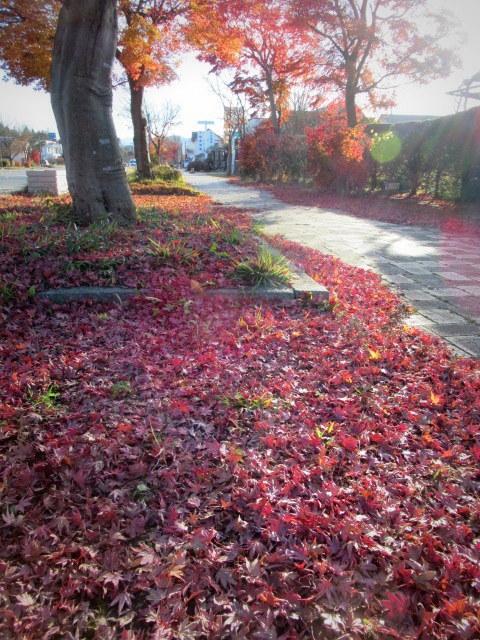 残る紅葉 * レッドカーペット&まだまだ続くホテル建設ラッシュ!_f0236260_22584556.jpg