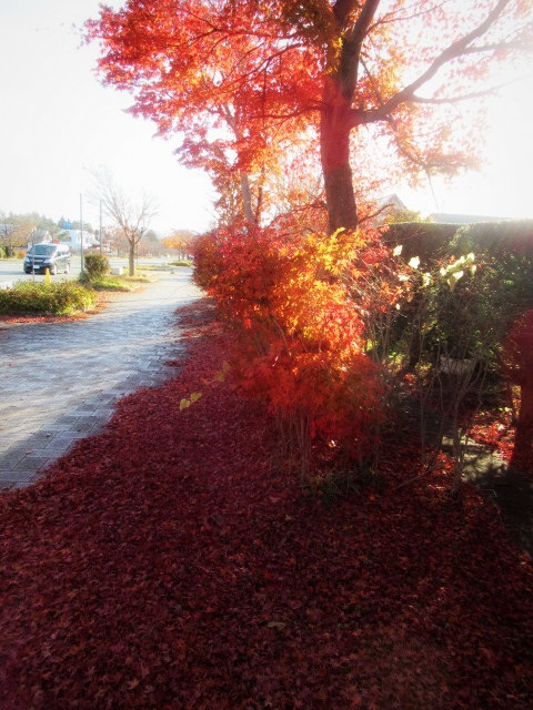残る紅葉 * レッドカーペット&まだまだ続くホテル建設ラッシュ!_f0236260_22591397.jpg