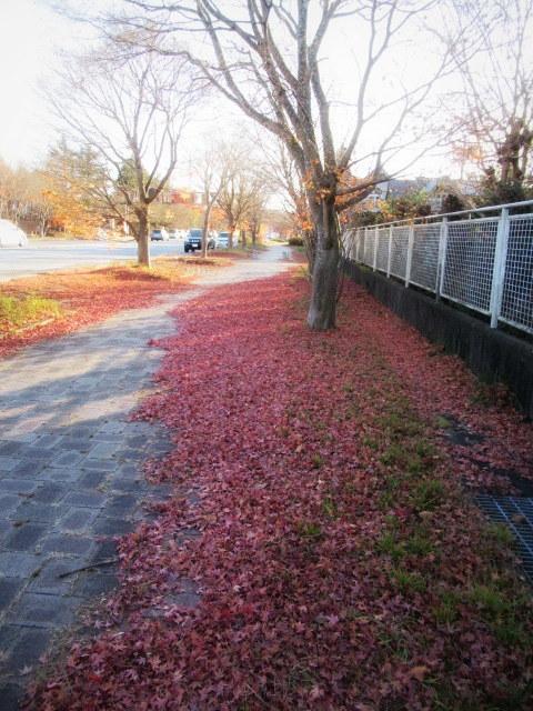 残る紅葉 * レッドカーペット&まだまだ続くホテル建設ラッシュ!_f0236260_23013651.jpg