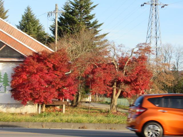 残る紅葉 * レッドカーペット&まだまだ続くホテル建設ラッシュ!_f0236260_23143681.jpg