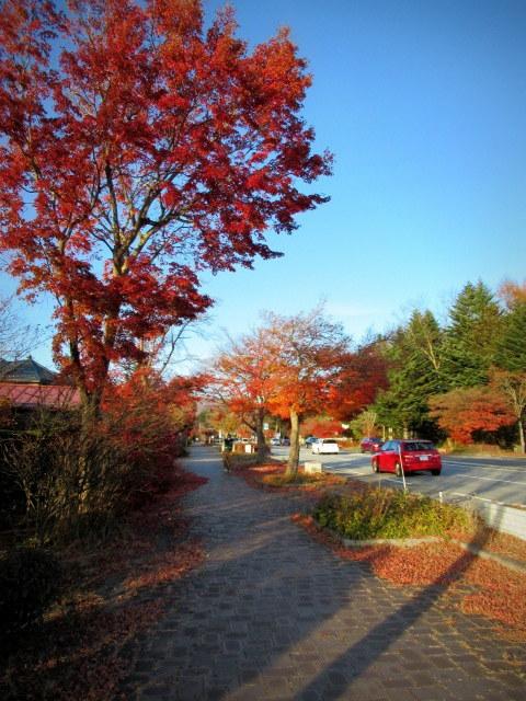 残る紅葉 * レッドカーペット&まだまだ続くホテル建設ラッシュ!_f0236260_23155102.jpg