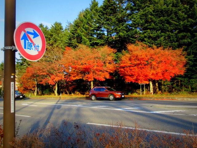 残る紅葉 * レッドカーペット&まだまだ続くホテル建設ラッシュ!_f0236260_23171410.jpg