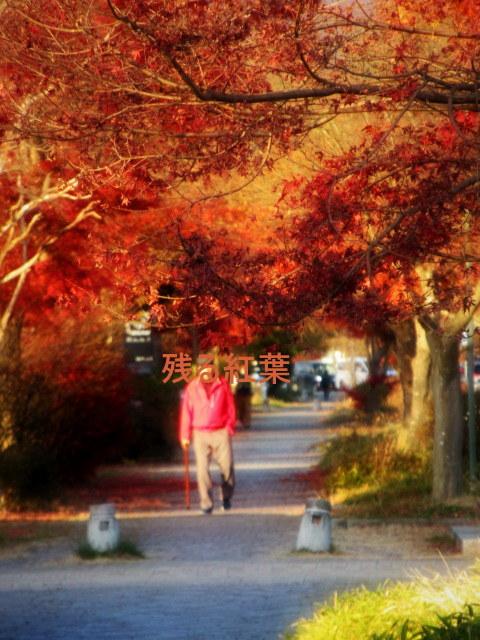 残る紅葉 * レッドカーペット&まだまだ続くホテル建設ラッシュ!_f0236260_23312740.jpg