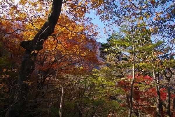 竜ケ岳(山梨県)_d0164761_09022914.jpg