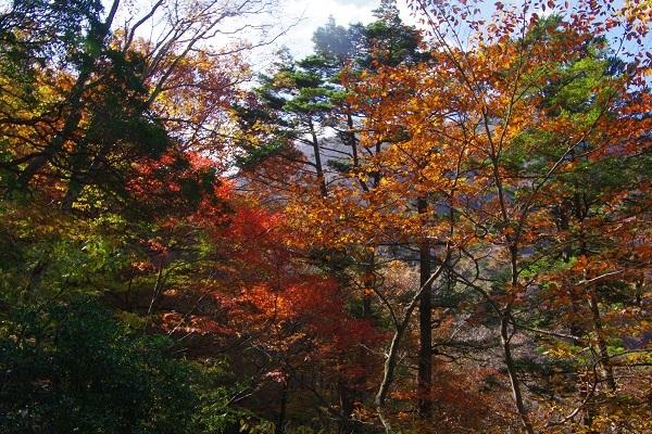 竜ケ岳(山梨県)_d0164761_09023780.jpg