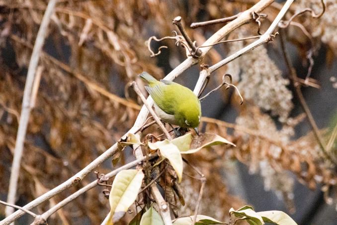 森の中で出会った鳥_b0148762_17372477.jpg