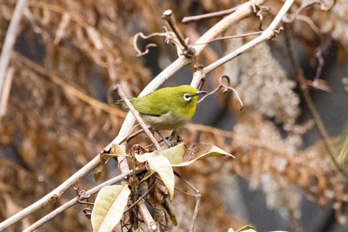 森の中で出会った鳥_b0148762_17373702.jpg