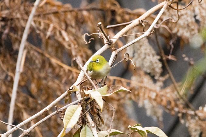 森の中で出会った鳥_b0148762_17374750.jpg