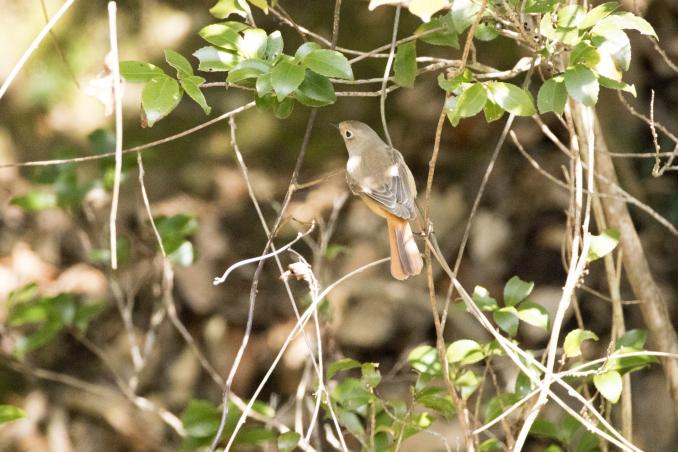 森の中で出会った鳥_b0148762_17380906.jpg