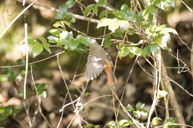 森の中で出会った鳥_b0148762_17382285.jpg