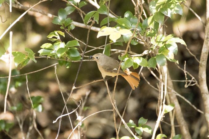 森の中で出会った鳥_b0148762_17383224.jpg