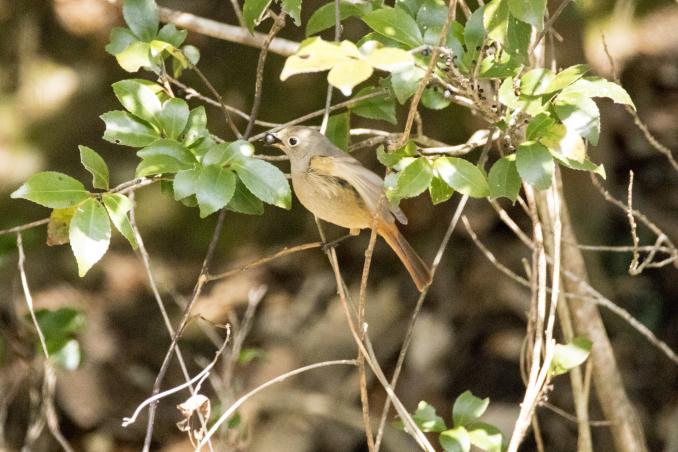 森の中で出会った鳥_b0148762_17384692.jpg