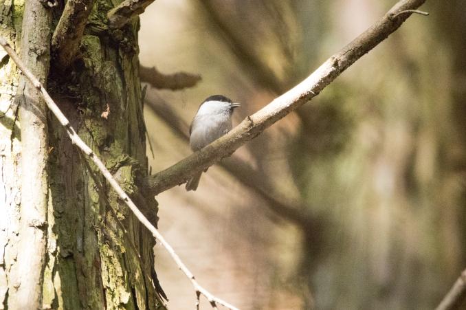 森の中で出会った鳥_b0148762_17405783.jpg