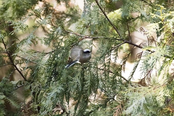 森の中で出会った鳥_b0148762_17443181.jpg