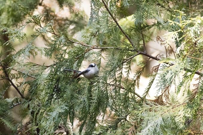 森の中で出会った鳥_b0148762_17443713.jpg
