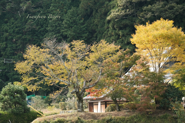 京都大原 **_d0344864_20154230.jpg