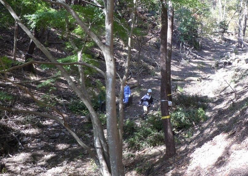 高さ30mのクヌギを伐る_b0102572_10452076.jpg