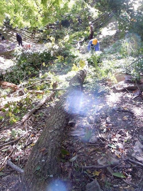 高さ30mのクヌギを伐る_b0102572_10460329.jpg