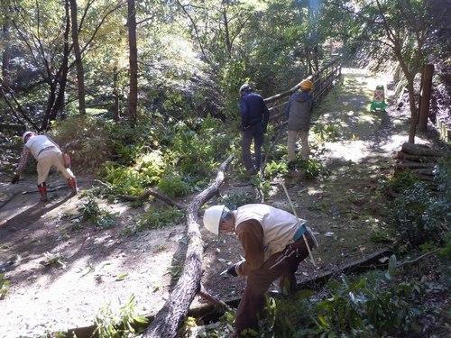 高さ30mのクヌギを伐る_b0102572_10470104.jpg