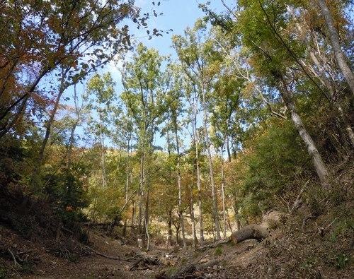 高さ30mのクヌギを伐る_b0102572_10485823.jpg