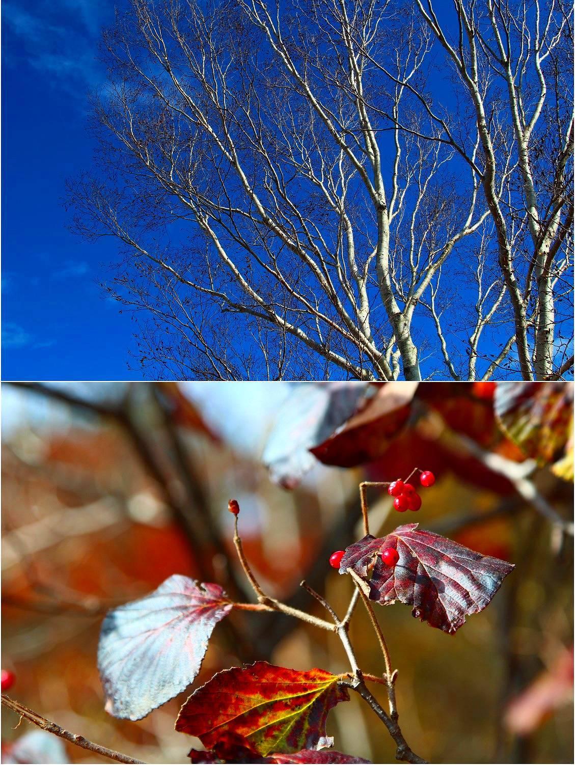 秋のピクニック_a0107981_08574048.jpg