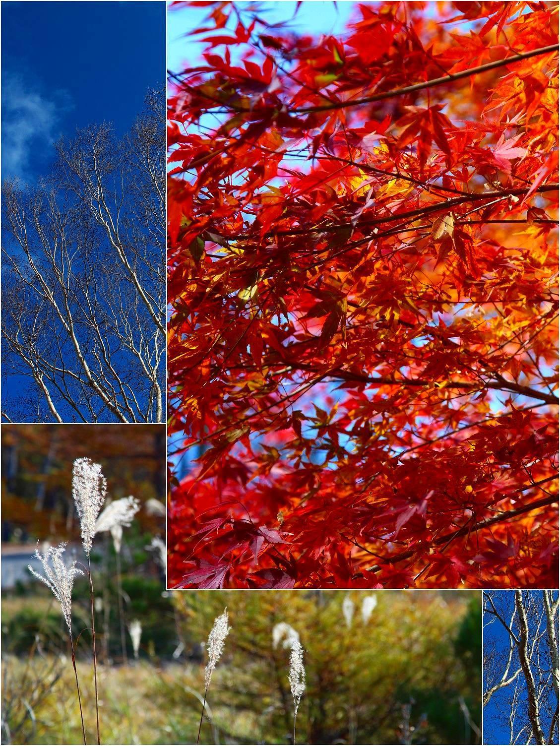 秋のピクニック_a0107981_08574164.jpg