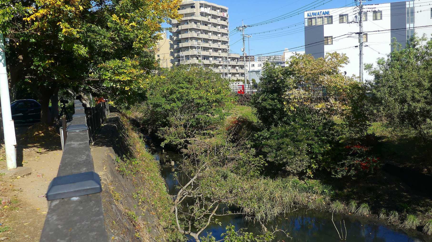 カワセミ広場は社交場 【 2019 11/17(日) 】_a0185081_15392031.jpg