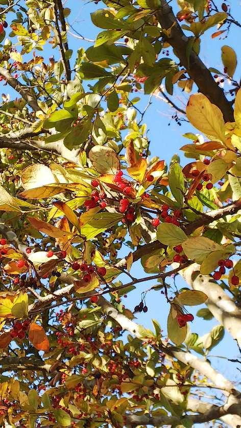 11月の散歩道_e0303187_22451649.jpg