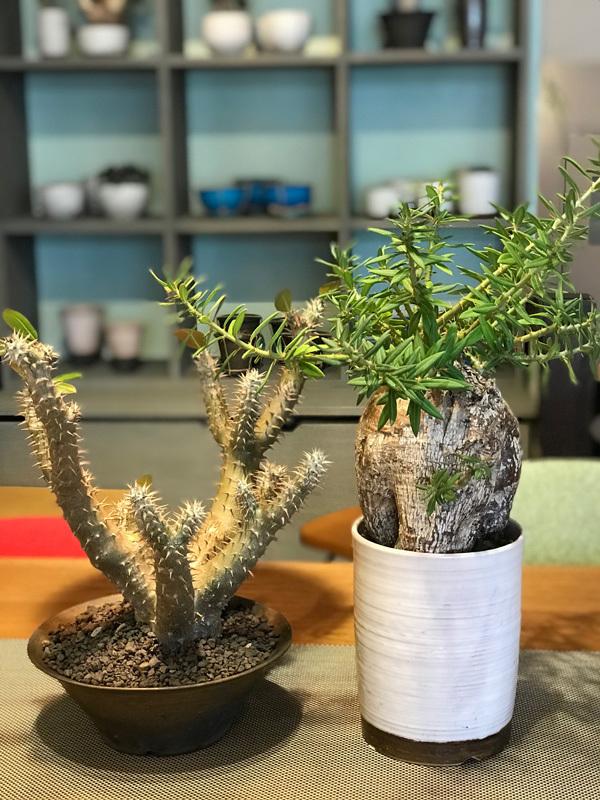 カグカフェ【植物】_f0264887_18460053.jpg