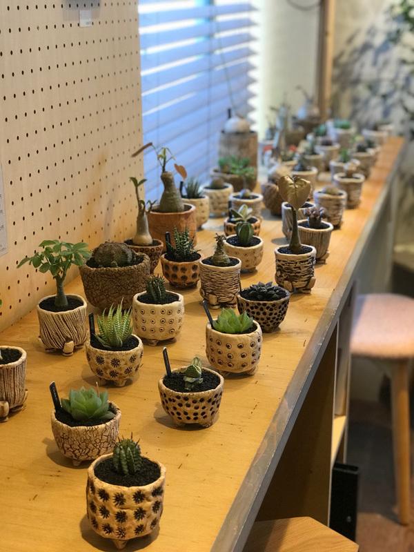 カグカフェ【植物】_f0264887_18460097.jpg