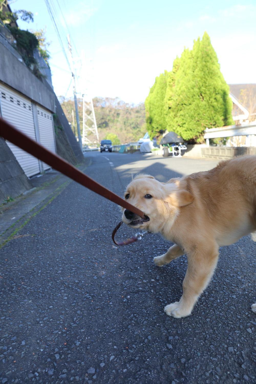 日曜朝のお散歩と病院♪_b0275998_18494318.jpg
