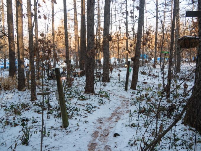 エゾリス君もお待ちかね?遅い初雪で薄っすら雪化粧!_f0276498_21573137.jpg