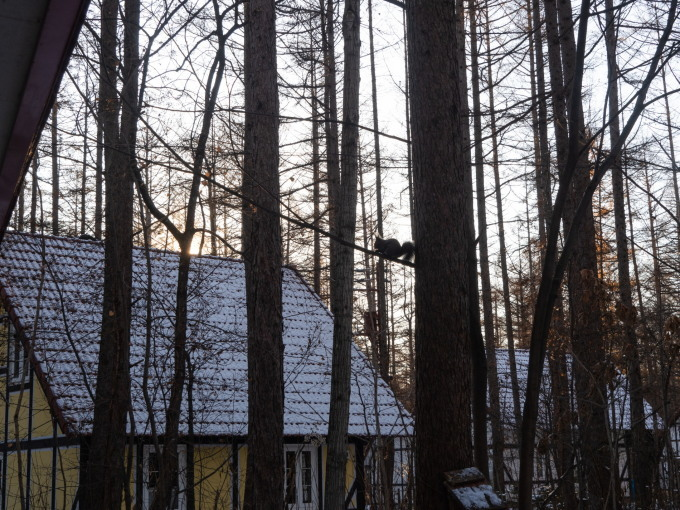 エゾリス君もお待ちかね?遅い初雪で薄っすら雪化粧!_f0276498_22031102.jpg