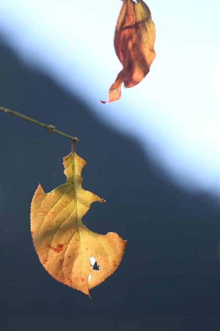 秋の贈り物① マユミ _a0357206_19124626.jpg