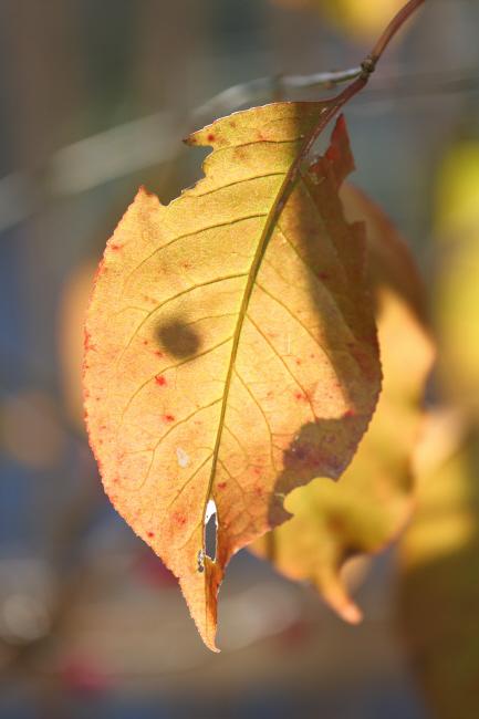 秋の贈り物① マユミ _a0357206_19125725.jpg