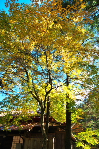日光 日光植物園の秋1_a0263109_22093085.jpg