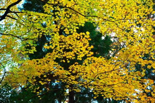 日光 日光植物園の秋1_a0263109_22093099.jpg