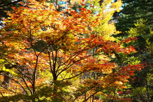 日光 日光植物園の秋1_a0263109_22093167.jpg
