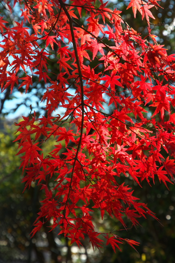 日光 日光植物園の秋1_a0263109_22093248.jpg