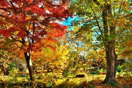 日光 日光植物園の秋1_a0263109_22093294.jpg