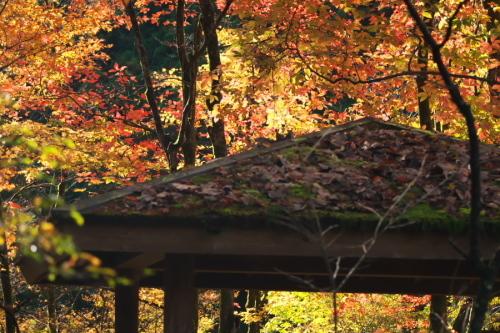 日光 日光植物園の秋1_a0263109_22095479.jpg
