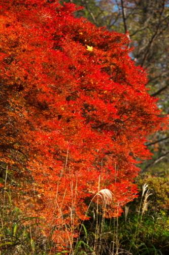 日光 日光植物園の秋1_a0263109_22095548.jpg