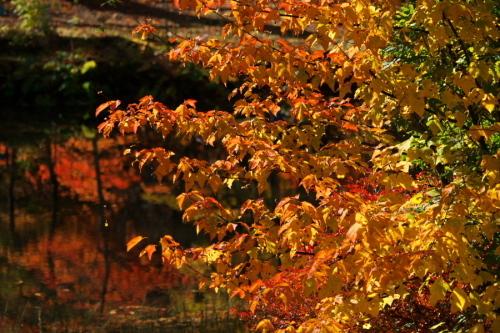 日光 日光植物園の秋1_a0263109_22103426.jpg