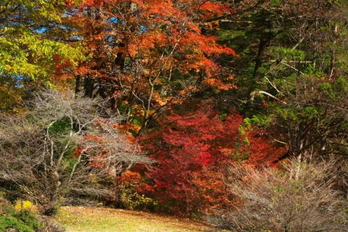 日光 日光植物園の秋1_a0263109_22103457.jpg