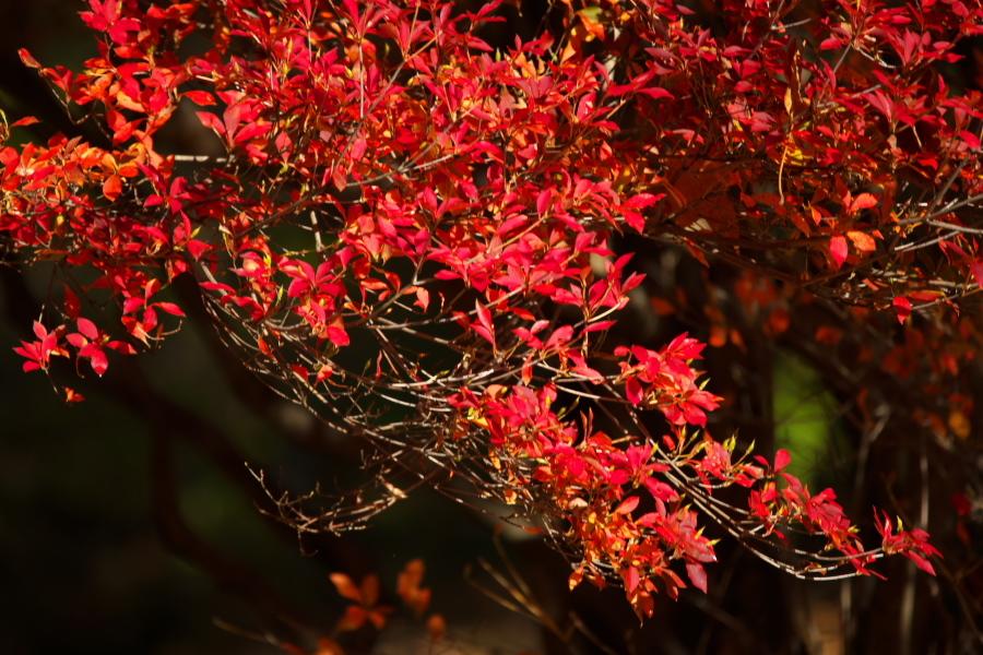 日光 日光植物園の秋1_a0263109_22112337.jpg