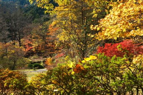 日光 日光植物園の秋3_a0263109_22164421.jpg
