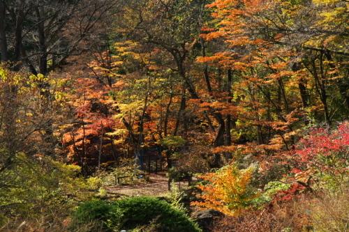 日光 日光植物園の秋3_a0263109_22164473.jpg