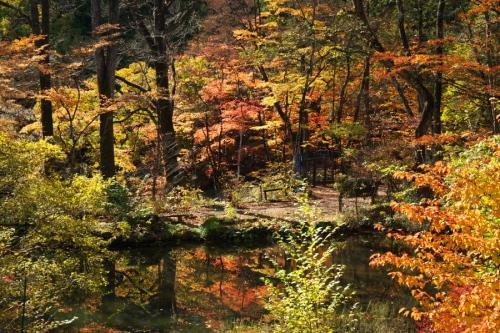 日光 日光植物園の秋3_a0263109_22164632.jpg