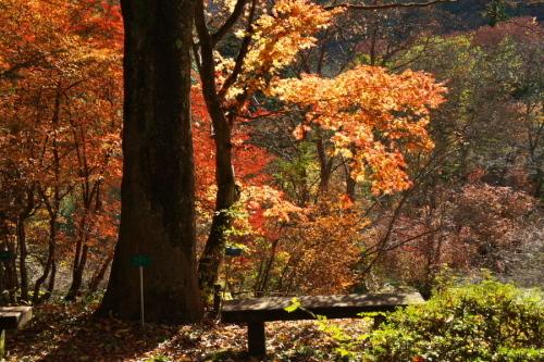 日光 日光植物園の秋3_a0263109_22164633.jpg
