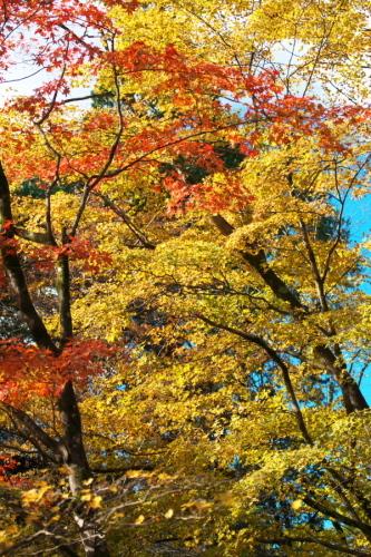 日光 日光植物園の秋3_a0263109_22182452.jpg
